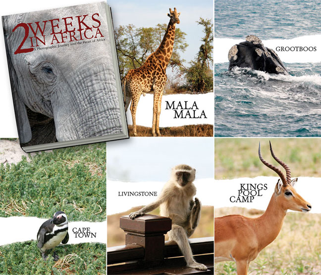 2_Weeks_in_Africa-Book_Jacket_and_Chapter_Markers